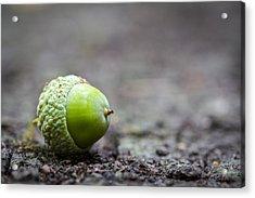 Green Acorn. Acrylic Print
