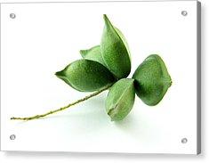 Green Almond Fruit Acrylic Print