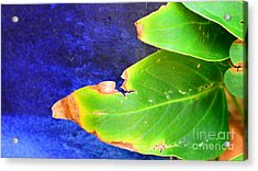 Green And Blue  Acrylic Print by Bobby Mandal