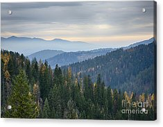 Green And Gold Forest Acrylic Print