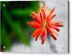 Green And Orange Acrylic Print