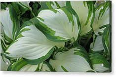 Green And White Acrylic Print