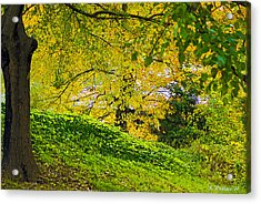Green And Yellow Acrylic Print by Brian Wallace