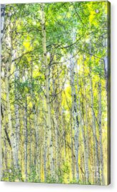 Green And Yellow Acrylic Print