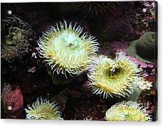 Green Anemone 5d24898 Acrylic Print