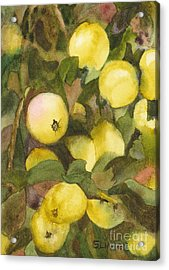 Green Apples Acrylic Print by Sandy Linden