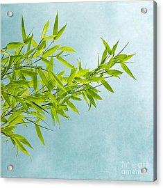 Green Bamboo Acrylic Print by Priska Wettstein