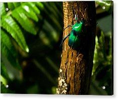 Green Beetle Acrylic Print