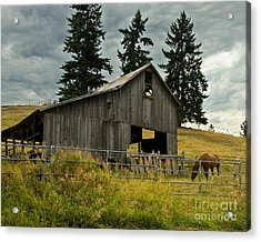 Green Bluff Horsebarn Acrylic Print by Chuck Flewelling