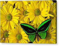 Green Butterfly Resting Acrylic Print by Garry Gay