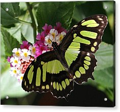 Acrylic Print featuring the photograph Green Butterfly With Flowers by Bill Woodstock