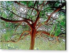 Green Canopy Acrylic Print by Terry Reynoldson