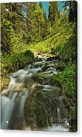 Green Colors And A Stream Acrylic Print by Mitch Johanson