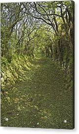 Acrylic Print featuring the photograph Green Country Lane by Jane McIlroy