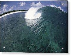 Green Curl Acrylic Print by Sean Davey