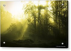 Acrylic Print featuring the photograph Green Dawn by Phil Abrams