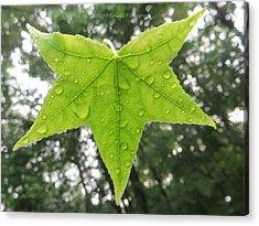 Green Droplets Acrylic Print by Sonali Gangane