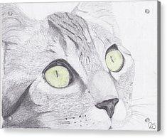 Green Eyed Cat Acrylic Print by David Smith