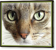 Green Eyed Cat Face Acrylic Print