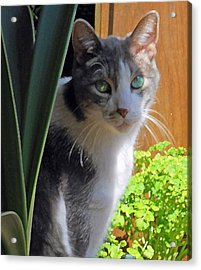 Green Eyed Cat Acrylic Print