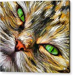 Green-eyed Tortie Acrylic Print