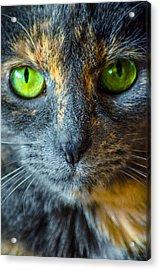 Green Eyes Acrylic Print by Brian Stevens