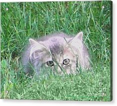 Acrylic Print featuring the photograph Green Eyes by Gena Weiser