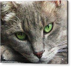 Green Eyes Acrylic Print by Leigh Anne Meeks