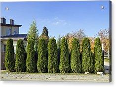 Green Fence Of Trees  Acrylic Print by Aleksandr Volkov