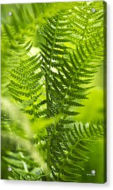 Green Fern Art Acrylic Print by Christina Rollo