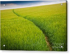 Green Field Acrylic Print by Michael Hudson