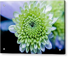 Green Flower Acrylic Print by Amr Miqdadi
