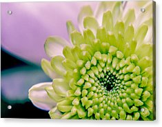 Green Flower2 Acrylic Print by Amr Miqdadi