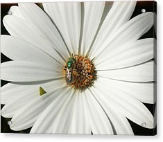 Green Fly On White Flower Acrylic Print