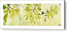 Green Foliage Triptychon Acrylic Print by Priska Wettstein
