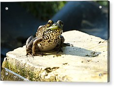 Green Frog - Lookin At Yah Acrylic Print by Janice Adomeit
