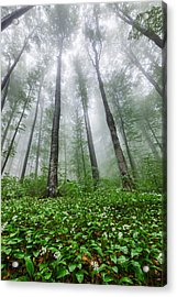 Green Giants Acrylic Print by Evgeni Dinev