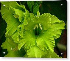 Green Gladiola Flowers Acrylic Print