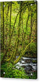 Green Green Acrylic Print by Jon Burch Photography