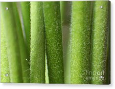 Green Hairy Stems Abstract Acrylic Print by Eden Baed