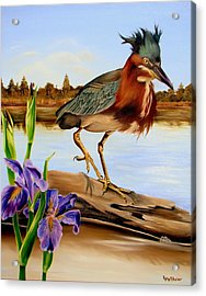 Acrylic Print featuring the painting Green Heron Dance by Phyllis Beiser