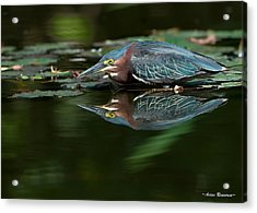 Green Heron Reflection 2 Acrylic Print