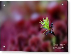 Green In A Sea Of Red Acrylic Print by Dan Friend