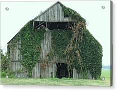 Green Ivy Barn Acrylic Print by Terry Scrivner