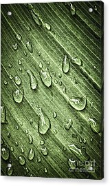 Green Leaf Background With Raindrops Acrylic Print by Elena Elisseeva