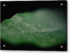 Green Leaf Acrylic Print by Jeffrey Platt