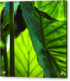 Acrylic Print featuring the photograph Green Leaf Trilogy I by Silke Brubaker