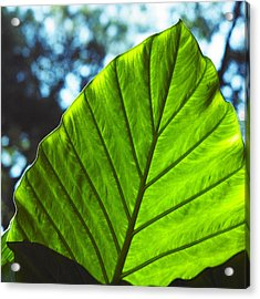 Acrylic Print featuring the photograph Green Leaf Trilogy II by Silke Brubaker
