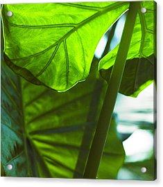 Green Leaf Trilogy IIi Acrylic Print