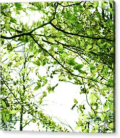 Green Leaves Acrylic Print by Blink Images